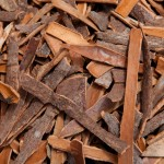 Cinnamon_Bark